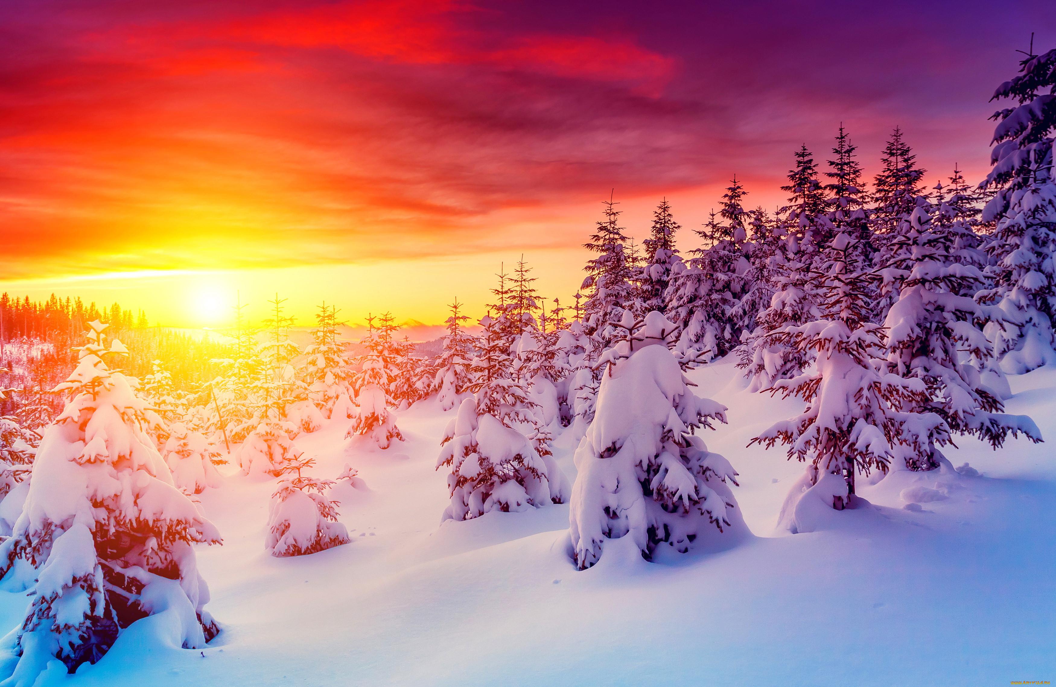 млекопитающее картинки зимний закат мерцающие действительно